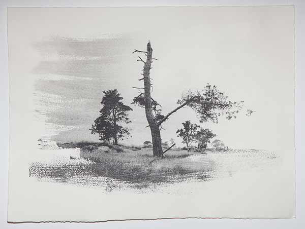Tree10_LisaStrombeck_web