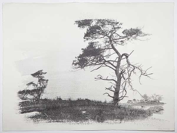 Tree1_LisaStrombeck_web