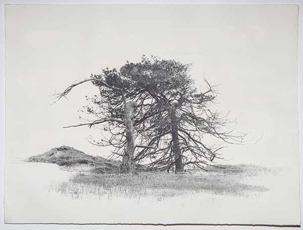 Tree3_LisaStrombeck_web