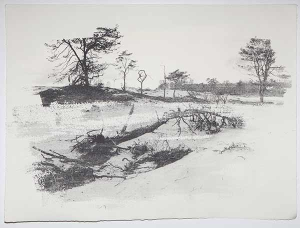 Tree6_Lisastrombeck_web