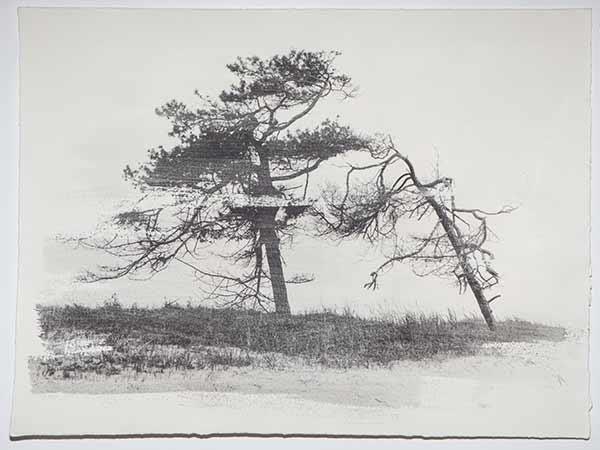 Tree9_LisaStrombeck_web